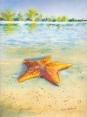 Starfish, 9x12, SALE $175